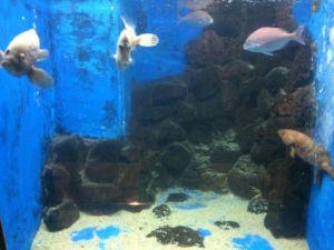echizen-aquarium 11.43.57