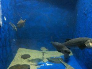 echizen-aquarium 11.44.29