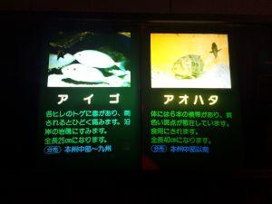 echizen-aquarium 11.44.36