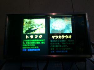 echizen-aquarium 11.44.43