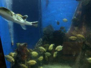 echizen-aquarium 11.44.45