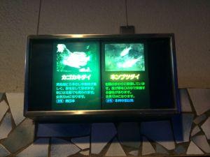 echizen-aquarium 11.44.58
