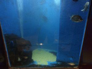 echizen-aquarium 11.45.00