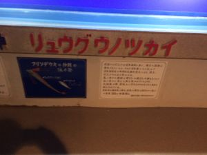 echizen-aquarium 11.45.02