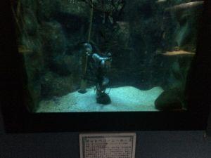echizen-aquarium 11.46.34