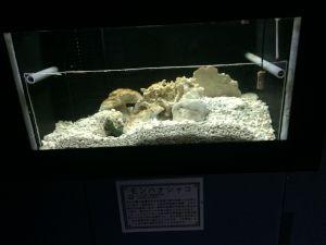 echizen-aquarium 11.46.50