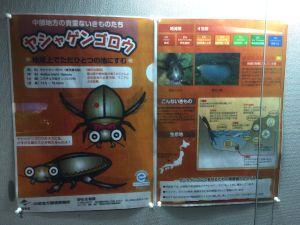 echizen-aquarium 11.48.11