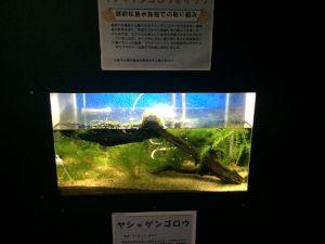 echizen-aquarium 11.48.17