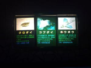 echizen-aquarium 11.50.36