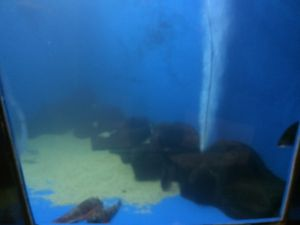 echizen-aquarium 11.50.46