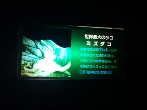 echizen-aquarium 11.51.03