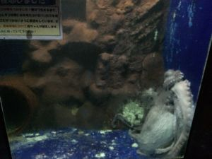 echizen-aquarium 11.51.05