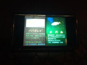 echizen-aquarium 11.51.25