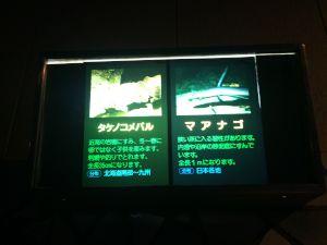 echizen-aquarium 11.51.49