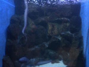 echizen-aquarium 11.51.51