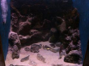 echizen-aquarium 11.52.04