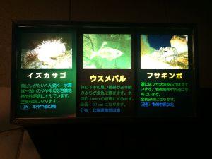 echizen-aquarium 11.52.13-1