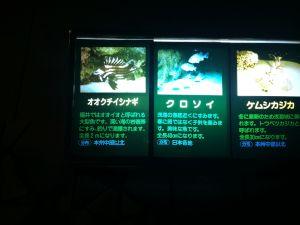 echizen-aquarium 11.52.22
