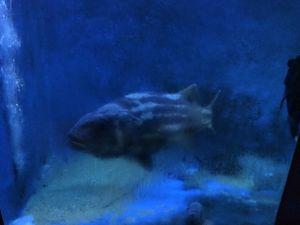 echizen-aquarium 11.52.24