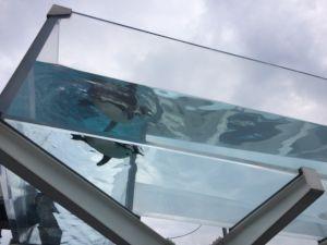 echizen-aquarium 11.55.56