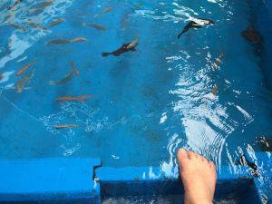 echizen-aquarium 12.15.59