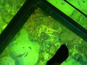 echizen-aquarium 13.48.36