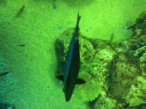 echizen-aquarium 13.56.34