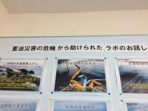 echizen-aquarium 14.09.14