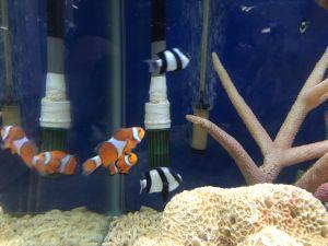 echizen-aquarium 14.11.35