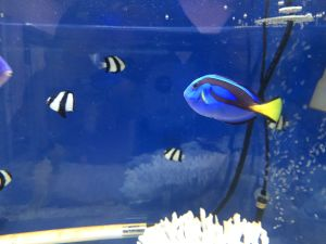 echizen-aquarium 14.11.38