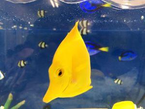 echizen-aquarium 14.11.41