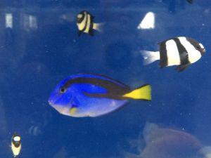 echizen-aquarium 14.11.51