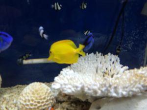 echizen-aquarium 14.11.59
