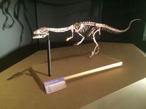 fukuiprefecturaldinosaurmuseum 13.24.50