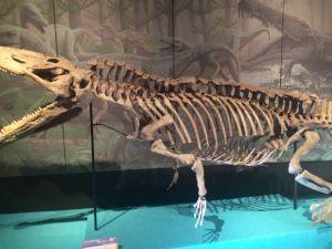 fukuiprefecturaldinosaurmuseum 13.25.19