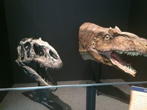 fukuiprefecturaldinosaurmuseum 13.29.07