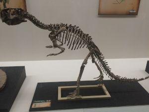 fukuiprefecturaldinosaurmuseum 13.30.24