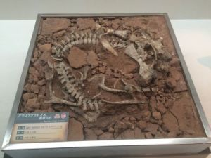 fukuiprefecturaldinosaurmuseum 13.30.36