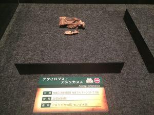 fukuiprefecturaldinosaurmuseum 13.31.23-1