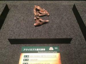 fukuiprefecturaldinosaurmuseum 13.31.26