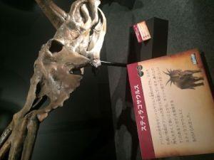 fukuiprefecturaldinosaurmuseum 13.34.02