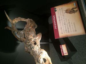 fukuiprefecturaldinosaurmuseum 13.34.10