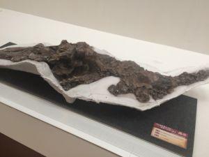 fukuiprefecturaldinosaurmuseum 13.35.11