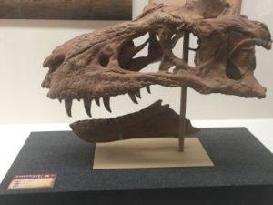 fukuiprefecturaldinosaurmuseum 13.36.03