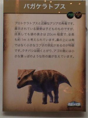 fukuiprefecturaldinosaurmuseum 13.37.35