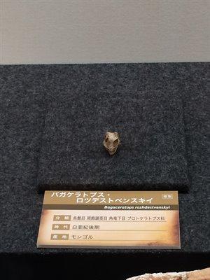 fukuiprefecturaldinosaurmuseum 13.37.41