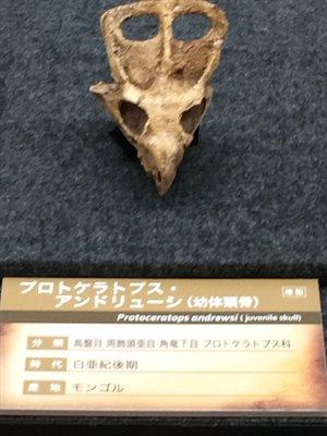 fukuiprefecturaldinosaurmuseum 13.37.48