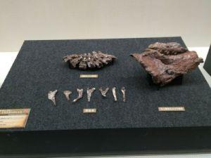fukuiprefecturaldinosaurmuseum 13.38.14