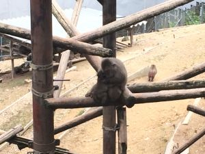 monkeypark-12-37-37