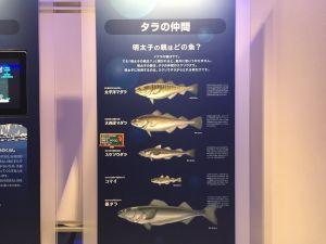 kanefuku-12-01-41